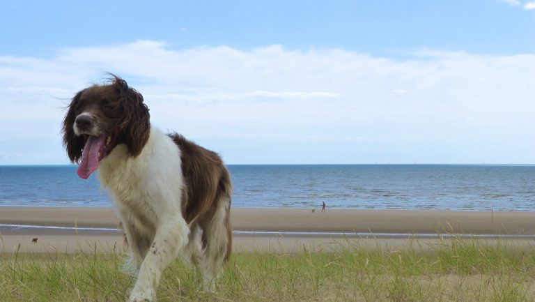 Chloe loves staying at our dog friendly holiday cottages