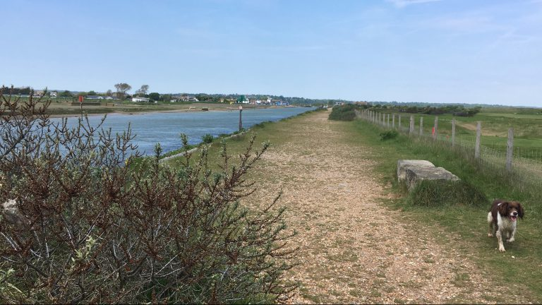 Footpath from Camber Sands along the River Rother to Rye with Springer Spaniel